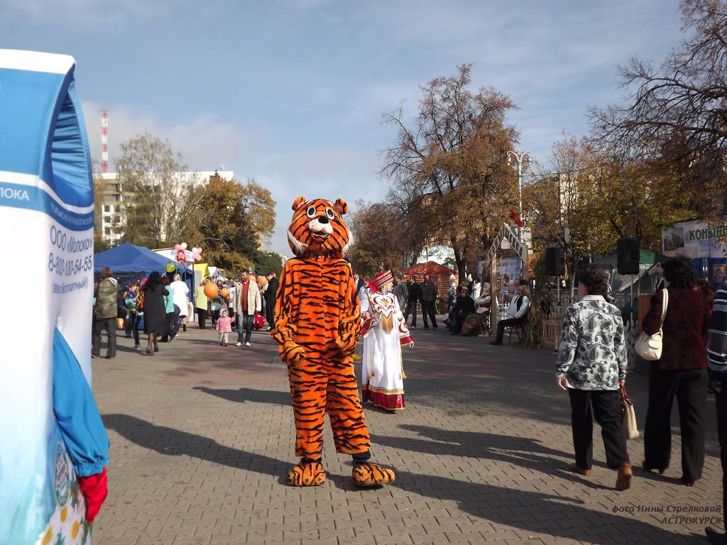 Фестивали курск